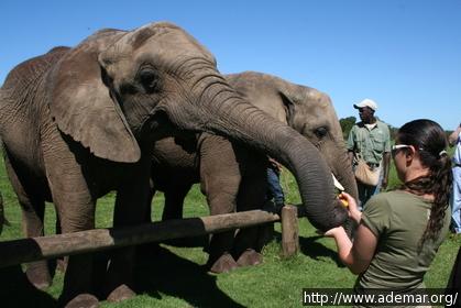 Alimentando os Elefantes