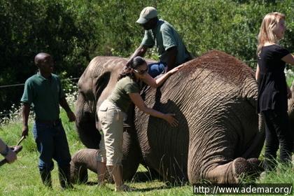 Viviane tocando um dos elefantes
