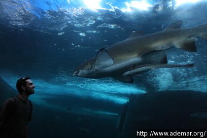 Tubarão no Two Oceans Aquarium