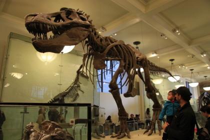 Museu de História Natural em NYC