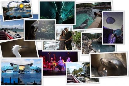 Mosaico de fotos da viagem à Miami e Orlando em 2011